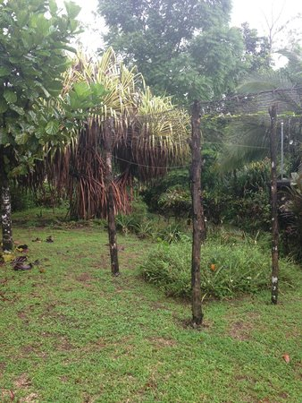 Princesa de la Luna Eco Lodge: Tropical plant farm