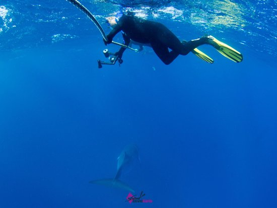 Divers Den : Hanging around for some whale action!