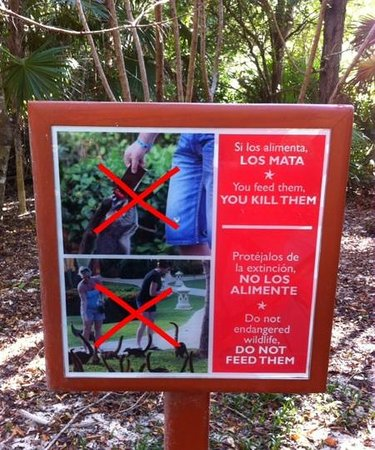 IBEROSTAR Paraiso Del Mar: Please DO NOT feed them!
