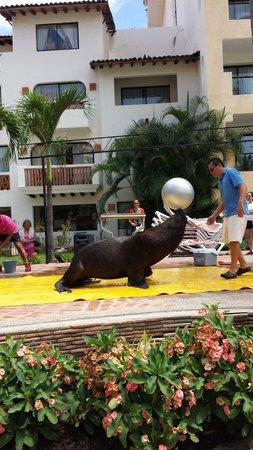 "Plaza Pelicanos Grand Beach Resort: Fun Activity with ""Flash"""