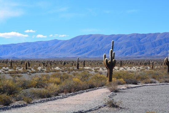 Parque Nacional Los Cardones: maravilloso