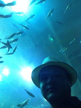 Georgia Aquarium : Georgia Aquiarium