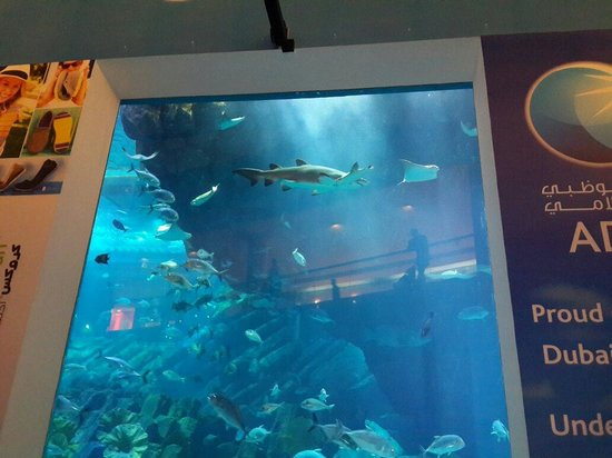 The Dubai Mall: A lots of beauty in aquarium.