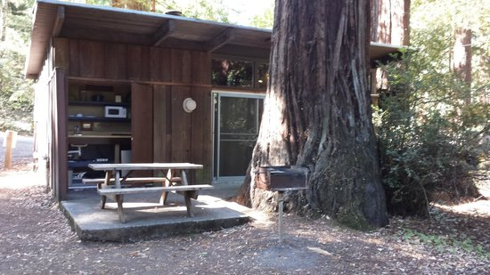 Redwoods River Resort & Campground: Our own Redwood tree on the patio.