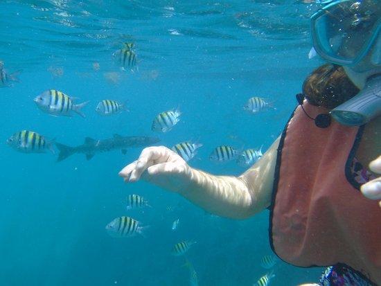 Looe Key (Florida Keys National Marine Sanctuary): Daughter with barracuda