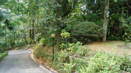 Hotel Cranford Villa: Garden