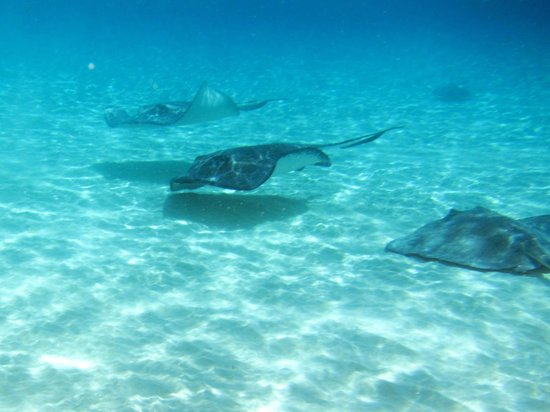 Captain Marvin's: Stingray Greeting Committee!