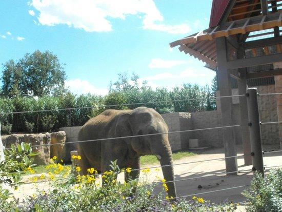 Denver Zoo: Elephant