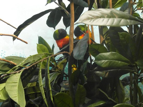 Denver Zoo : love birds