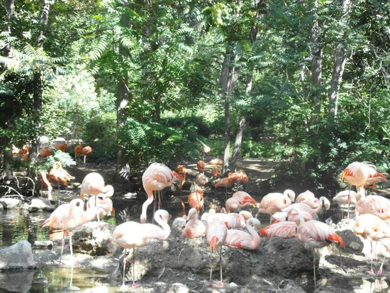 Denver Zoo: Flamingo :)
