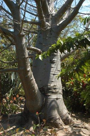 Jardin d'Eden : Un arbre content