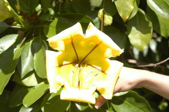 Jardin d'Eden : Une autre fleur, jaune