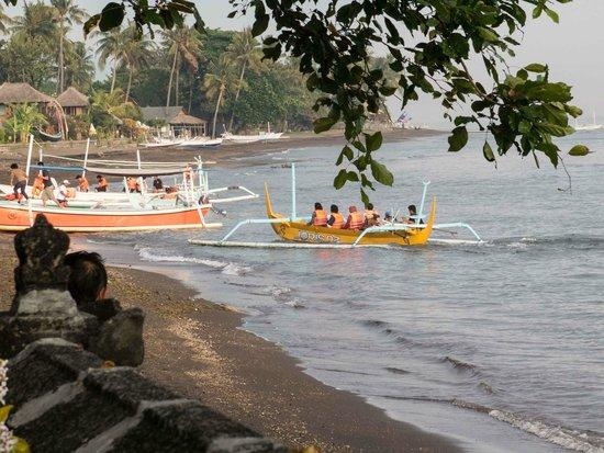 Aditya Beach Resort : Boats take people to see dolphins
