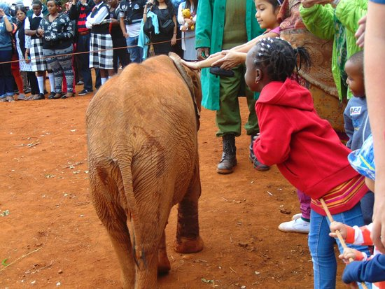David Sheldrick Wildlife Trust : Kids touching the baby elephant