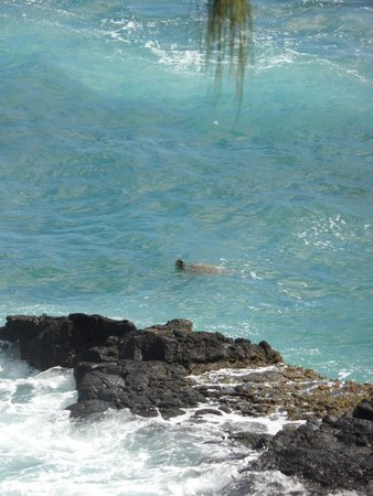 Spouting Horn: Sea turtle...look to the right