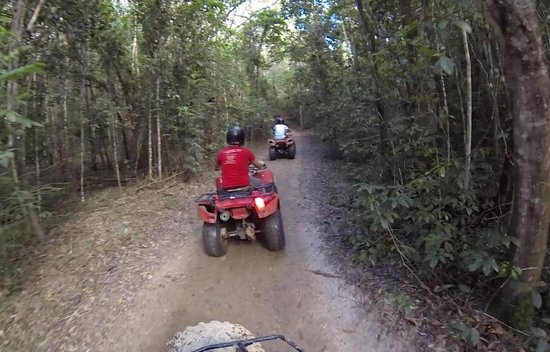 Down and Dirty Quad Bike Tours : 2