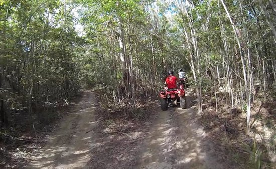 Down and Dirty Quad Bike Tours : 5