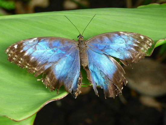 L'Ile aux Papillons: Papillon