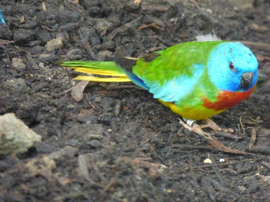 L'Ile aux Papillons: Oiseau exotique