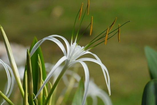 The Lalit Resort & Spa Bekal: Refreshing Flowers at Resort