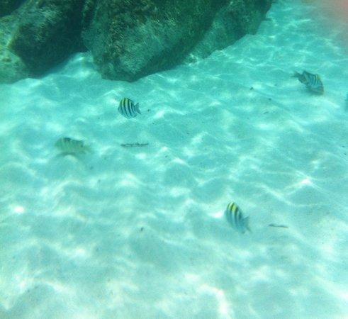 BuBu Villa: sealife