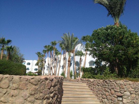Domina Coral Bay Oasis: hotel