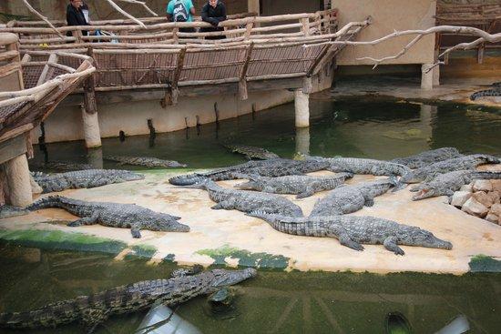 Alligator Bay : crocodiles