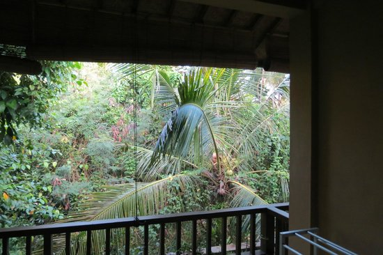 Jati 3 Bungalows : A view from the room