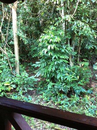 Mutiara Taman Negara : View from the room