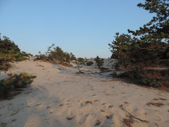 Province Lands Visitor Center : dune