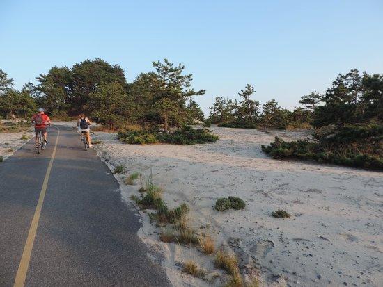 Province Lands Visitor Center : dune 1