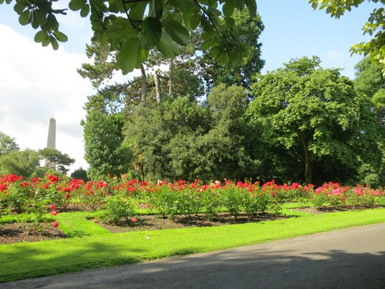 Phoenix Park: Rose garden with Wellington monument in background