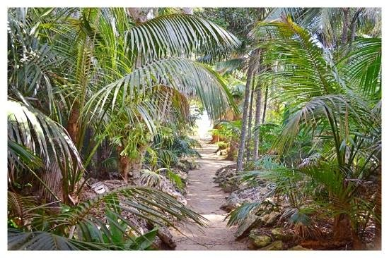 Pinetrees Lodge: Path from breakfast table to the beach