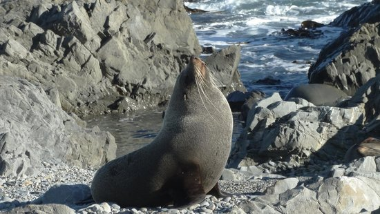 Seal Coast Safari : One of the local residents