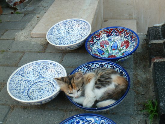 Historic Areas of Istanbul : Cat sleeping in a bowl