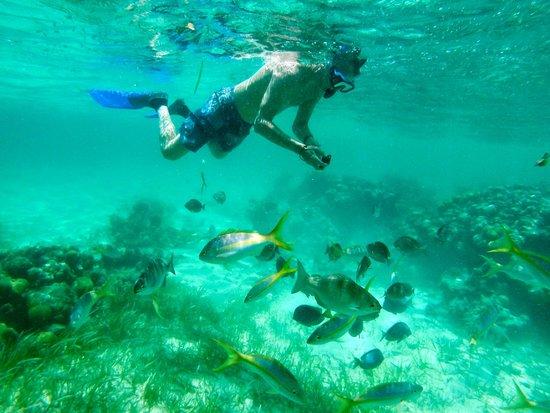 Paradisus Rio de Oro Resort & Spa: apnée