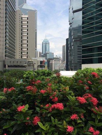 Conrad Hong Kong: View from poolside