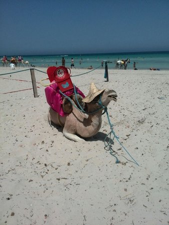 Djerba Sun Club: la plage du jerba sun club