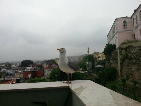 Erguvan Hotel: terrazza colazione