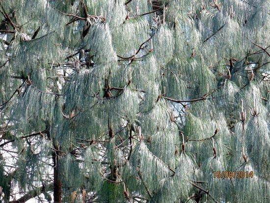 Amantikir Park : Árvore que eu não conheço o nome