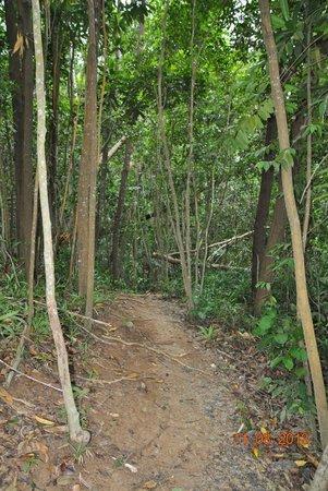 Manukan Island: тропа