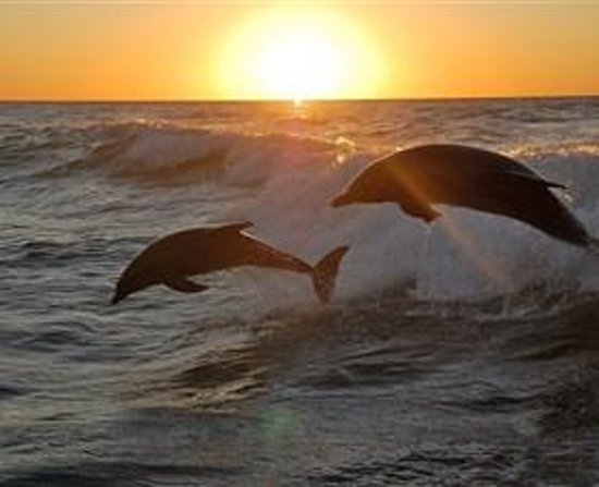 Eden Beachfront Holiday Park: Eden Beachfront - A great viewing stop of watching dolphins, seals and whales