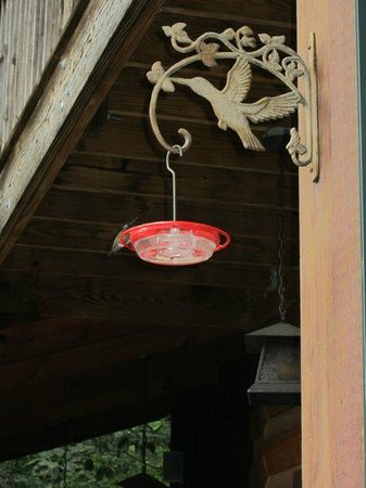 Lazy Bear Lodge: Humming bird