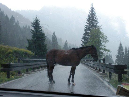Al Gallo Forcello: Ostacoli sulla strada...