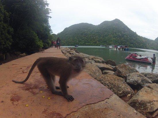 Naam: Met some monkeys on an island