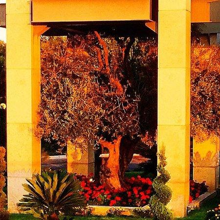 Minoa Palace Resort : Particolare della reception