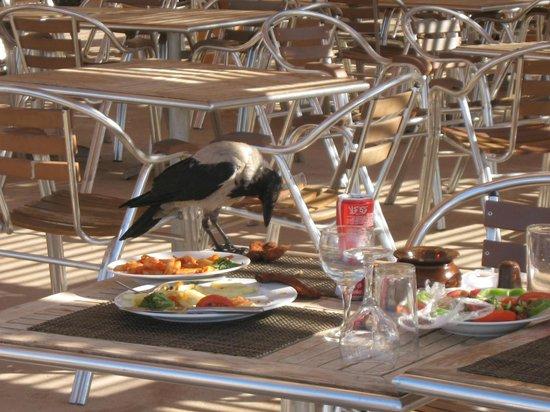Stella Di Mare Beach Resort & Spa Makadi Bay: ristorante in spiaggia