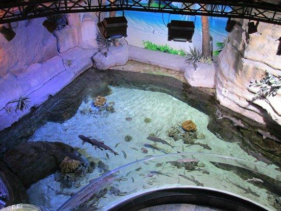 Dubai Aquarium & Underwater Zoo: Zoo