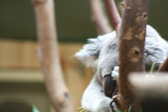 Edinburgh Zoo: .