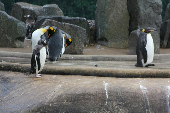 Edinburgh Zoo: .